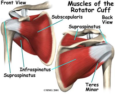 shoulder_impingement_anatomy-rotator-cuff